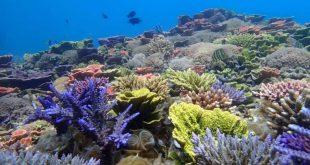 Diajukan Sejak Tahun 2017, UNESCO Tetapkan Karimunjawa Jadi Cagar Hiosfer