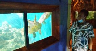 Habiskan Anggaran Rp 900 juta, Wahana Kura-kura di Pantai Kartini Direnovasi