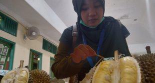 Durian Jepara